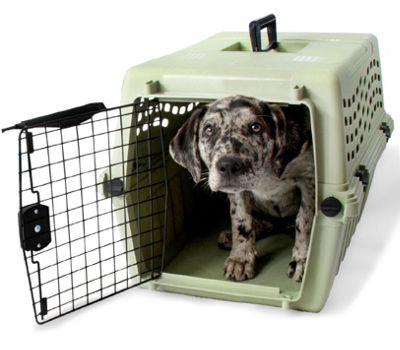 Petmate Intermediate Deluxe Vari Jr. Dog Kennel in Moss Bank Green
