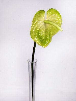 Artificial - Anthurium - Lime