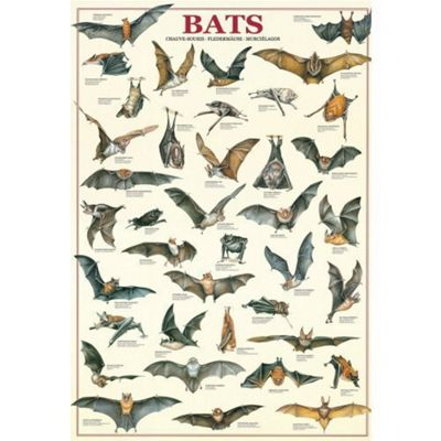 Bats Puzzle