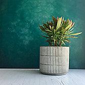 Block Striped Concrete Plant Pot Cover - Large