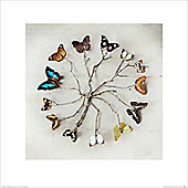 Ian Winstanley Butterfly Harmony Mini Print 40x40cm