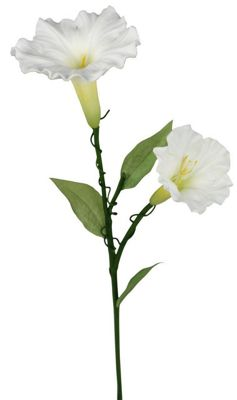 White Real Touch Ipomoea Flower For Decoration