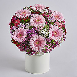 Sweet William & Germini Posy