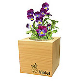 FeelGreen Grow Your Own BioDegradable EcoCube with Violet Seeds 7.5 x 7.5 x 7.5 cm