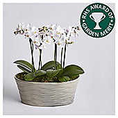 AGM Orchid Planter