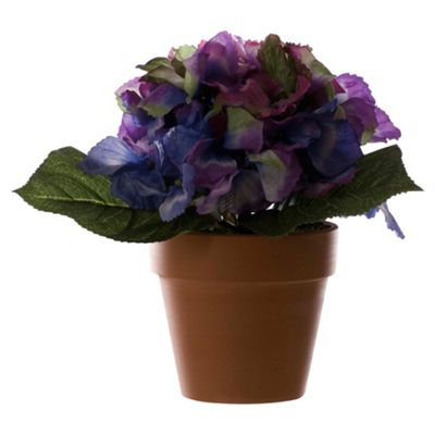 Buy 21Cm Large Hydrangea Flower In Pot - Lavender / Blue from our ...
