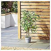 Garden XP Artificial Bamboo Tree, 80cm