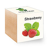 FeelGreen Grow Your Own BioDegradable EcoCube with Strawberry Seeds 7.5 x 7.5 x 7.5 cm