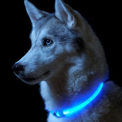 Auraglow One Size Fits All - LED Light Up Dog Collar High Visibility Flashing Safety Pet Leash - Blue