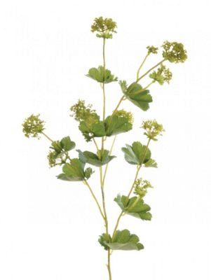 Artificial - Lady's Mantle - Green