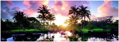 Palm Trees - Panoramic - 2000pc Puzzle