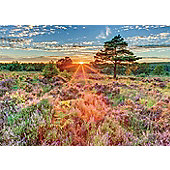 Heather at Sunset - 500pc Puzzle