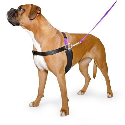 Ancol PURE Dog Listeners & Training Harness & Lead Set - Small