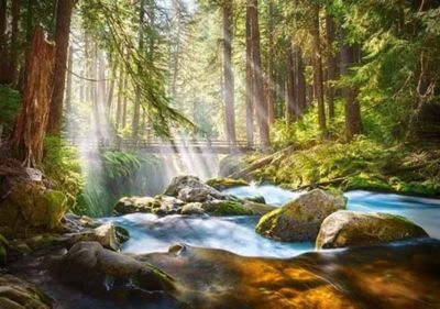 Forest Stream of Light - 500pc Puzzle
