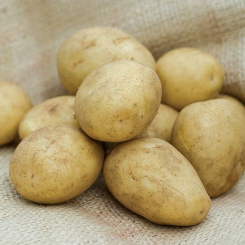 Potato 'Casablanca' - 5 tubers