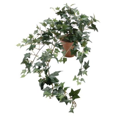 51cm Trailing Sage Ivy Potted Plant - Green