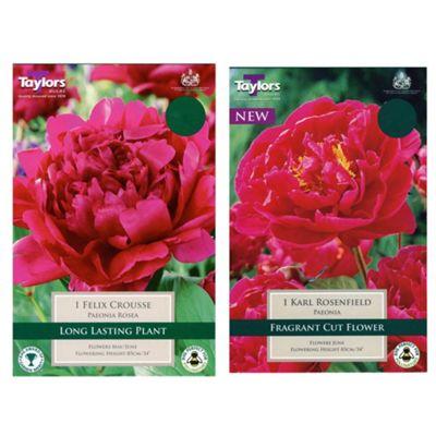 Peony 'Rosea Felix Crousse' and 'Karl Rosenfeld' Summer Flowering Pink Paeonia Bulbs