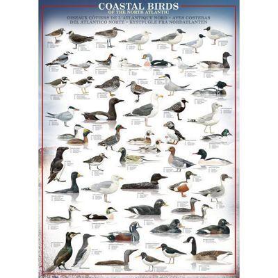 Coastal Birds of the North Atlantic Puzzle