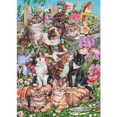 Cats Galore - 1000pc Puzzle