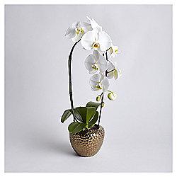 Cascading Phalaenopsis Orchid in metallic pot
