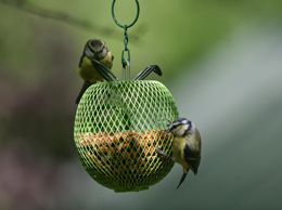 Apple peanut feeder