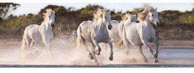 Running Horses - 1000pc Panoramic Puzzle