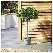 Garden XP Artificial Bay Tree, 90cm