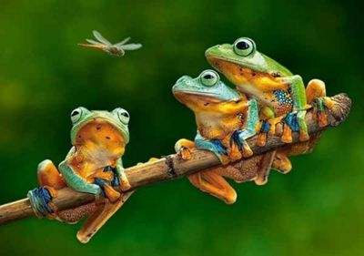 The Frog Companions - 500pc Puzzle