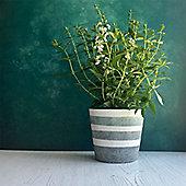 Green Striped Concrete Plant Pot Cover