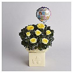 New Baby Rose Gift