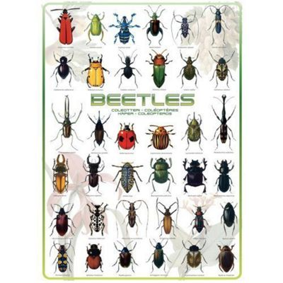 Beetles Puzzle