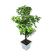 "Artificial 4ft 6"" Schefflera Tree"
