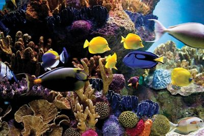 Tropical Fish & Coral Poster 61x91.5cm,