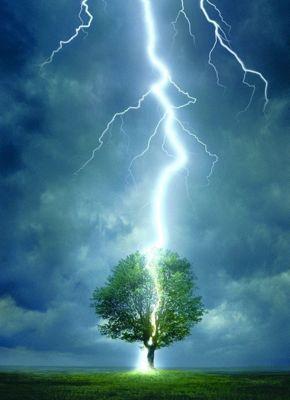 Lightning Striking Tree Puzzle