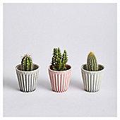 Prickly Trio