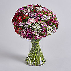 Simply Sweet Williams Bouquet