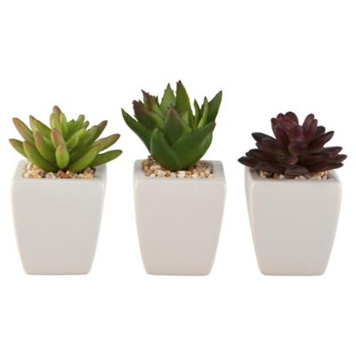 buy succulents in mini drum pot from our artificial. Black Bedroom Furniture Sets. Home Design Ideas