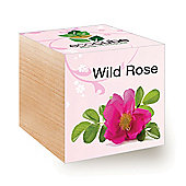 FeelGreen Grow Your Own BioDegradable EcoCube with Wild Rose Seeds 7.5 x 7.5 x 7.5 cm