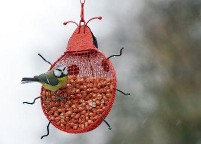 Ladybird peanut feeder