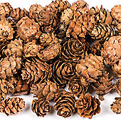 Natural Larch Cones Set - Creative Arts and Crafts Supplies for Xmas Crafting and Christmas Decoration/Wreath/Model Making (Bag of 250g)
