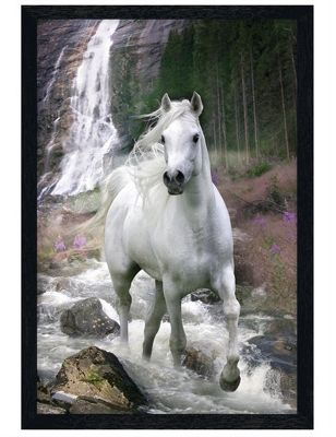 Bob Langrish Black Wooden Framed Horse in a Waterfall Poster