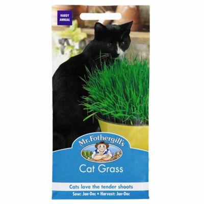 Mr Fothergill's Seeds - 25g Cat Grass
