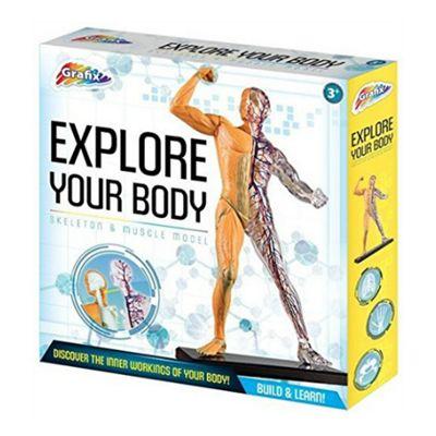 Human Body Model - Skeleton & Muscle Model