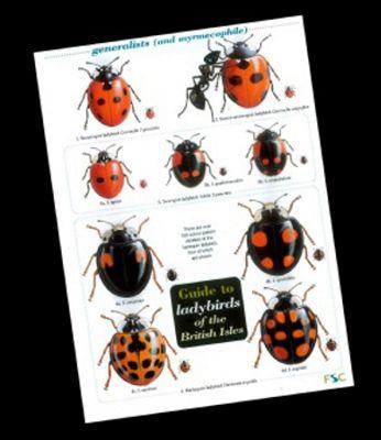 Wildlife World Field guide - Ladybirds