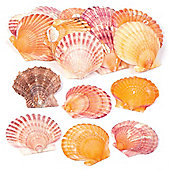Mini Scallop Shells Set for Kids and Adults to Embellish Sealife Arts Crafts & Displays - Natural Crafting Supplies (Pack of 250g)