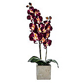 Homescapes Tall Artificial Burgundy Orchid in Stone Pot