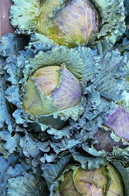 cabbage (cabbage 'January King')