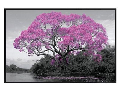 Gloss Black Framed Tree In Bloom Poster
