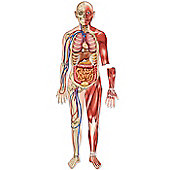 Learning Resources Magnetic Human Body Set