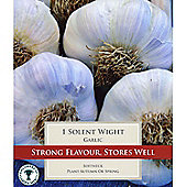 1 x Large Garlic 'Solent Wight' Bulbs - Vegetable Bulbs
